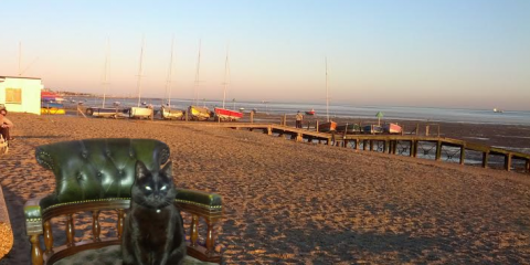 Cat on Southend Beach