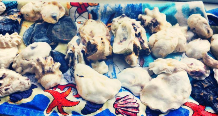 Southend Shells Collection