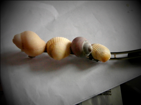Seashell hairslide