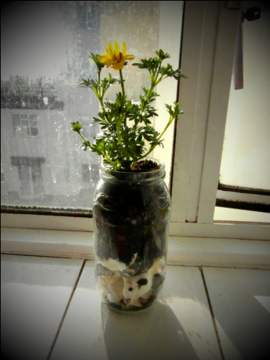 Shell Flower Jar