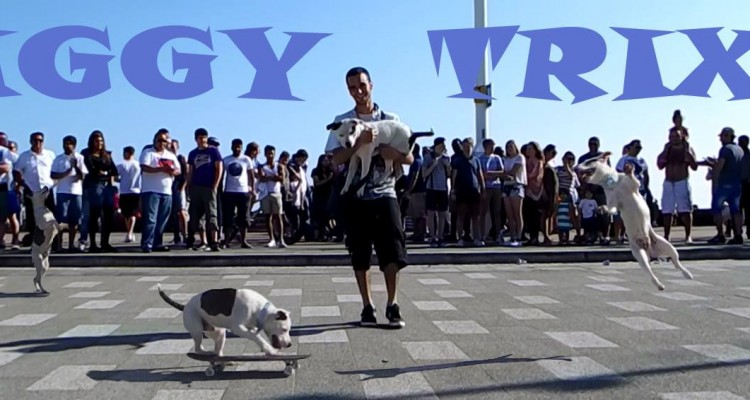 Ziggy Trixx: Skateboarding Dog in Southend